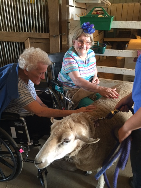 Photo of senior citizens petting a sheep in the barn at Nature's Edge