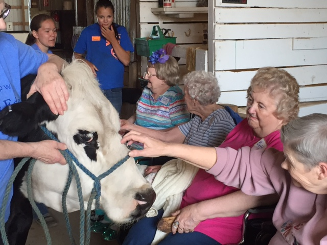 Photo of senior citizens petting a cow in the barn at Nature's Edge