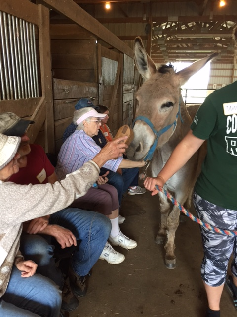 Photo of a donkey being fed by senior citizens in the barn at Nature's Edge